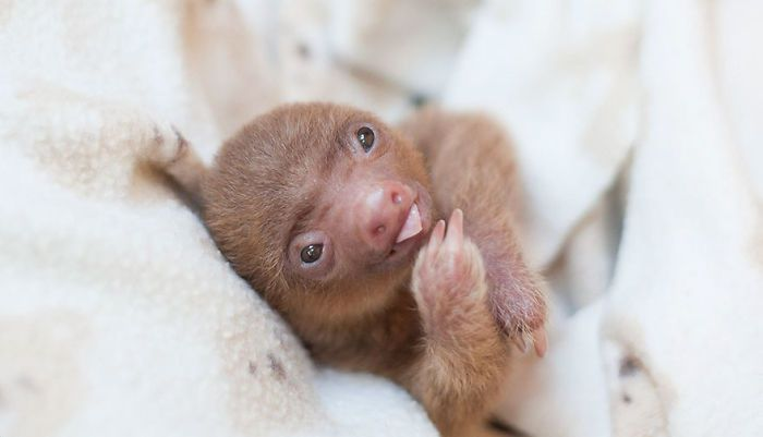 cute-sloths-vinegret-10