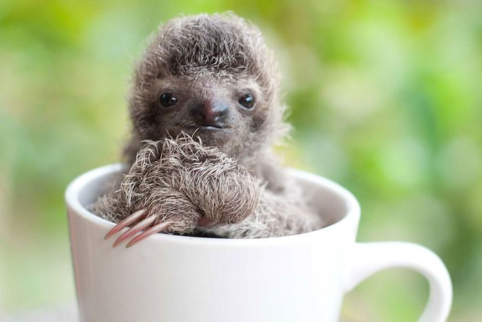 cute-sloths-vinegret-11