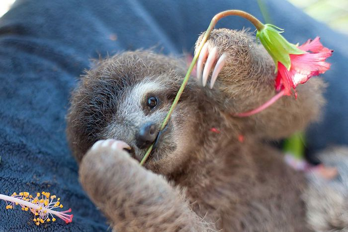 cute-sloths-vinegret-12