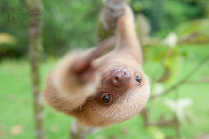 cute-sloths-vinegret-14
