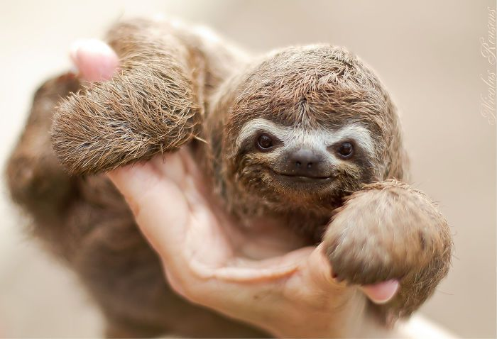 cute-sloths-vinegret-15