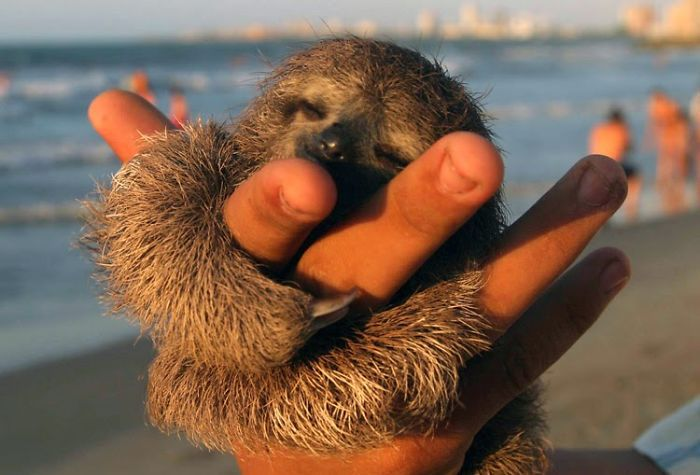 cute-sloths-vinegret-3
