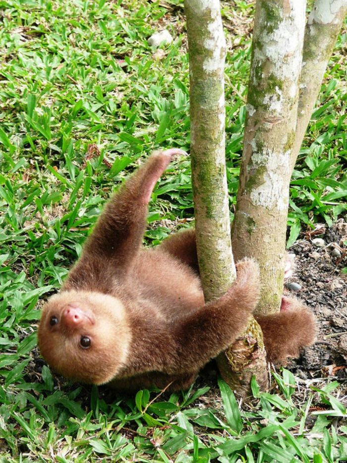 cute-sloths-vinegret-4