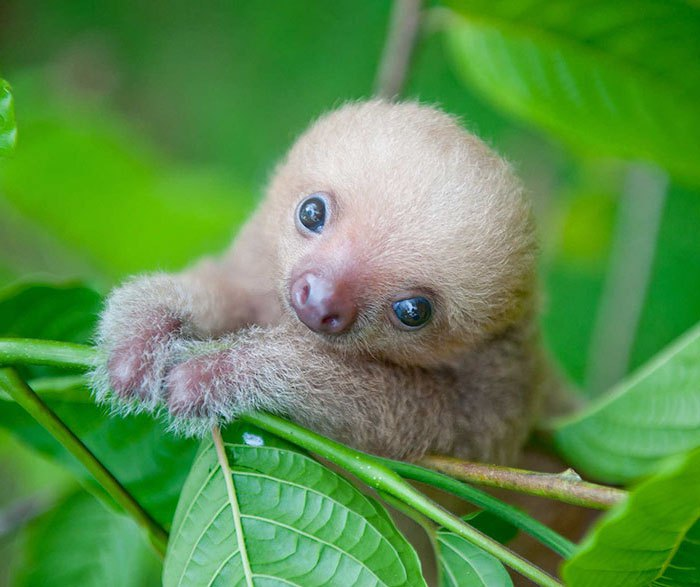 cute-sloths-vinegret-5