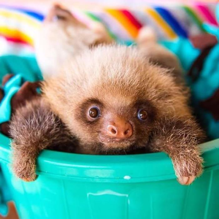 cute-sloths-vinegret-7