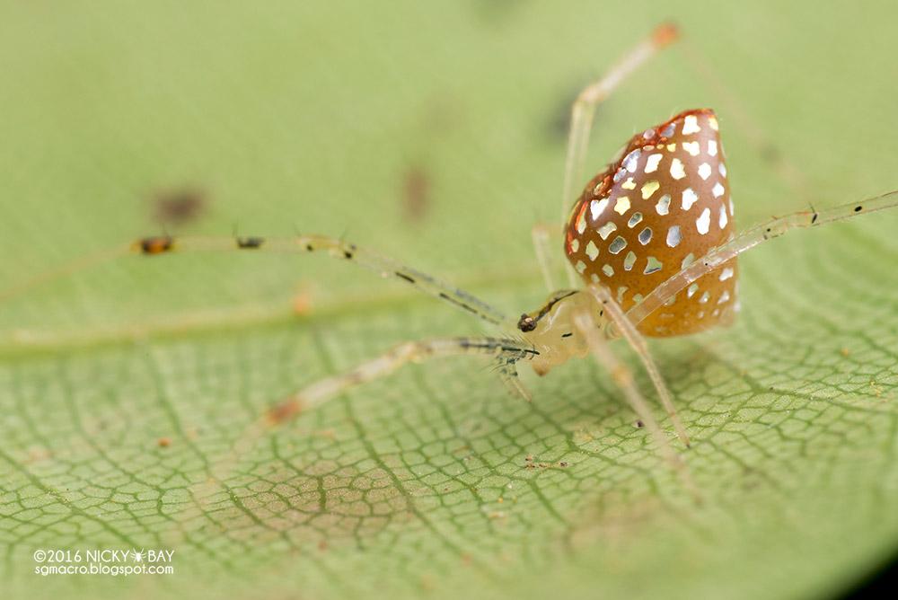 neobychnye-zerkalnye-pauki-9