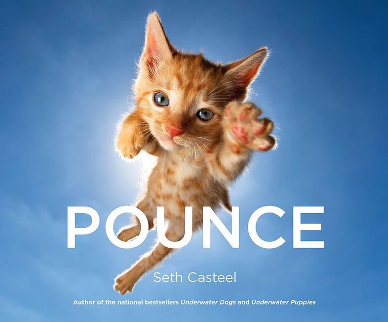 pounce-new-kitten-book-by-seth-casteel-vinegret-1