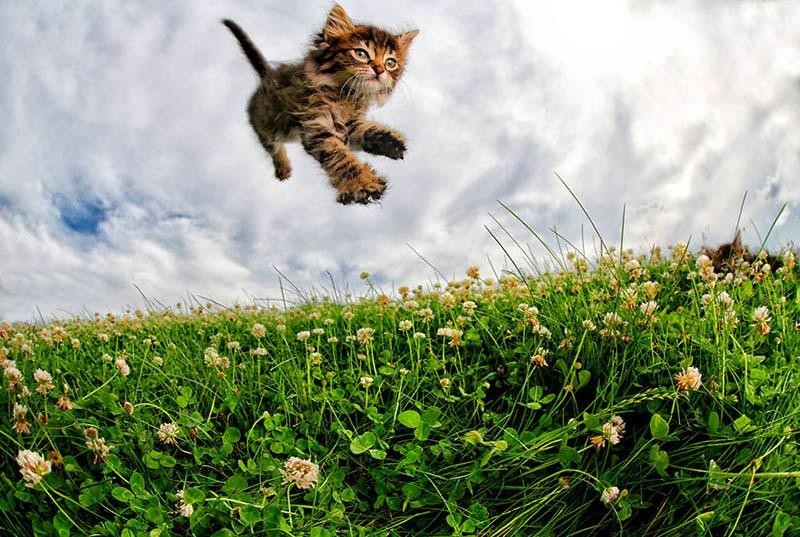 pounce-new-kitten-book-by-seth-casteel-vinegret-2