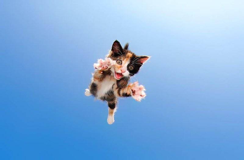 pounce-new-kitten-book-by-seth-casteel-vinegret-3