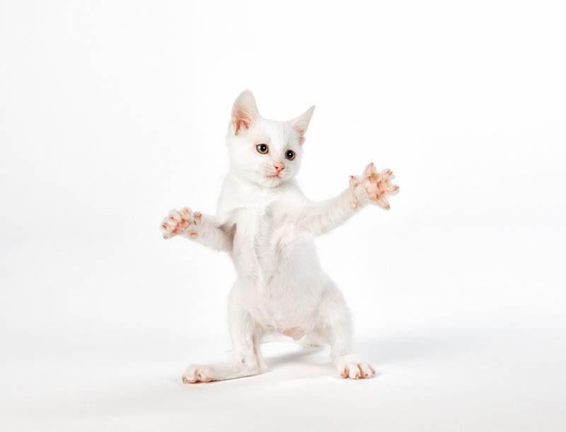 pounce-new-kitten-book-by-seth-casteel-vinegret-4