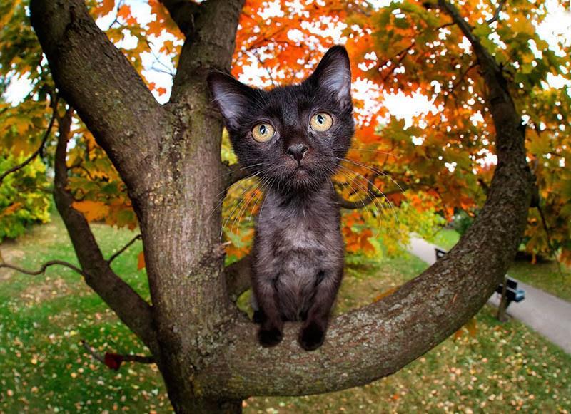 pounce-new-kitten-book-by-seth-casteel-vinegret-5