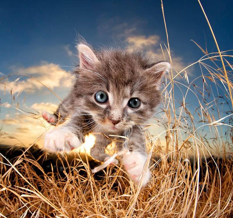 pounce-new-kitten-book-by-seth-casteel-vinegret-6