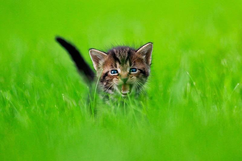 pounce-new-kitten-book-by-seth-casteel-vinegret-8