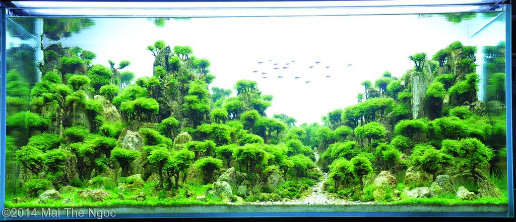 akvarium-13
