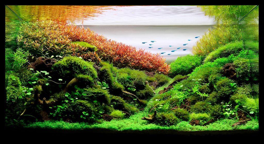 akvarium-17