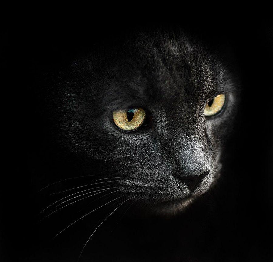 animal-portraits-15