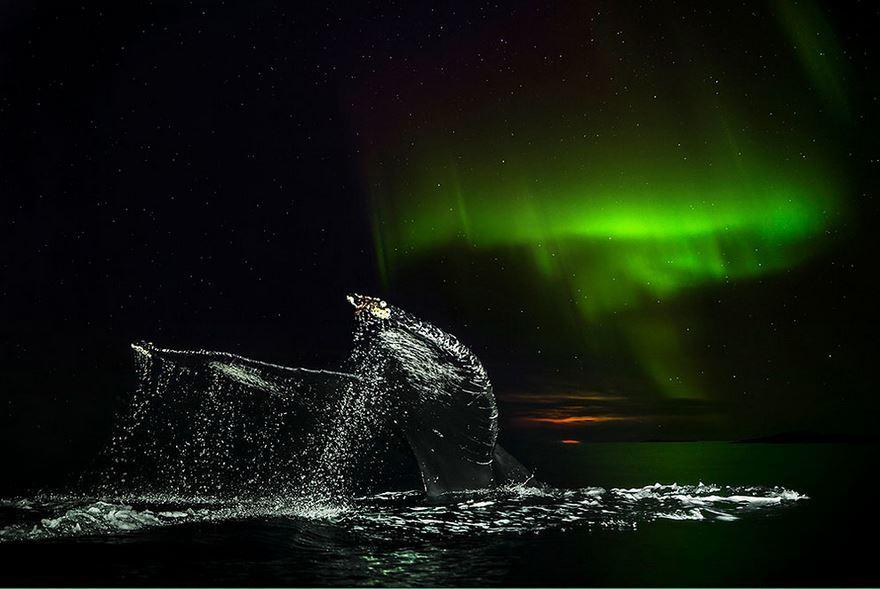 arctic-whales-photography-audun-rikarsen-7-582abc88e7471__880