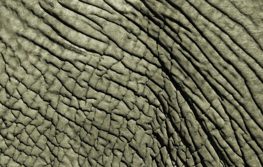 elephant-skin-663376-lw