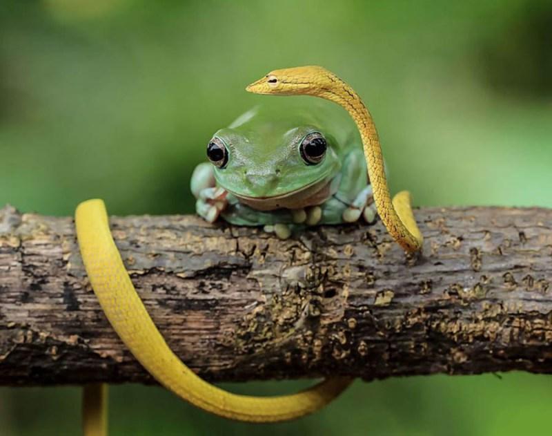 frog-photography-tanto-yensen-vinegret-1