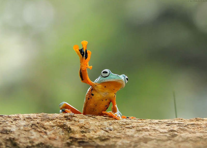 frog-photography-tanto-yensen-vinegret-10