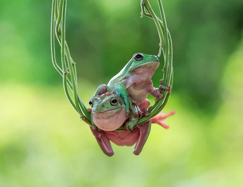 frog-photography-tanto-yensen-vinegret-12