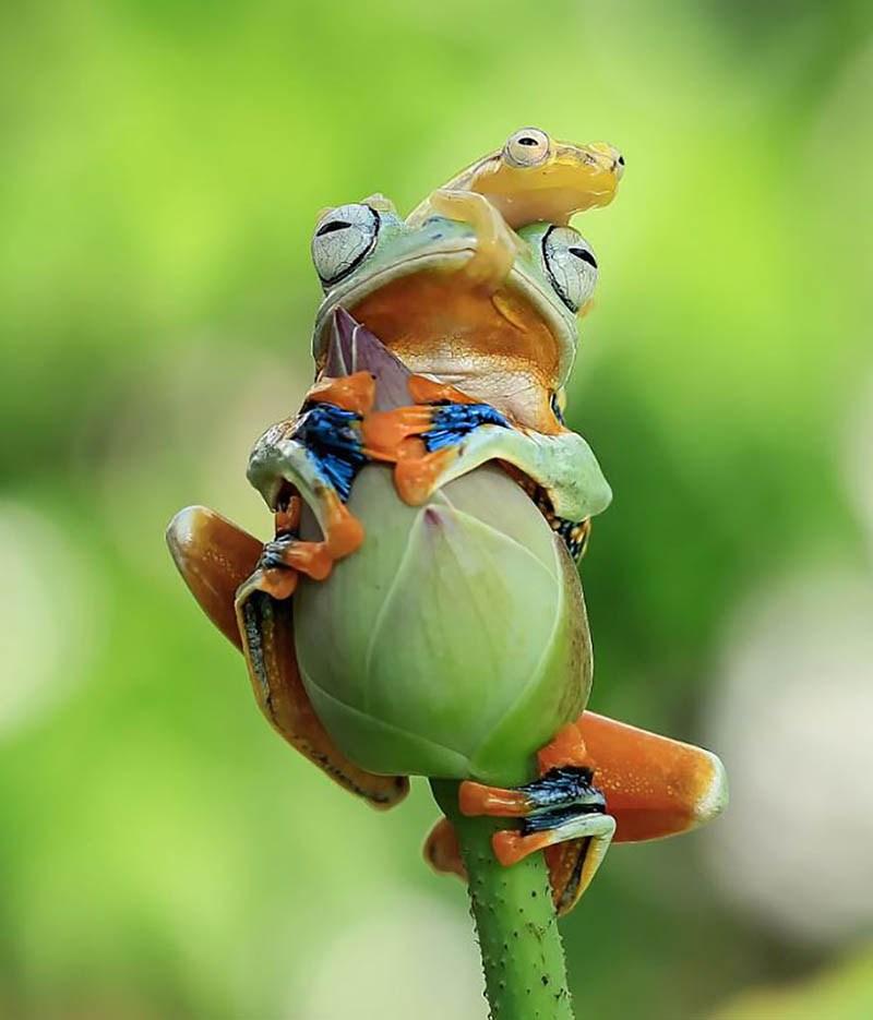 frog-photography-tanto-yensen-vinegret-17