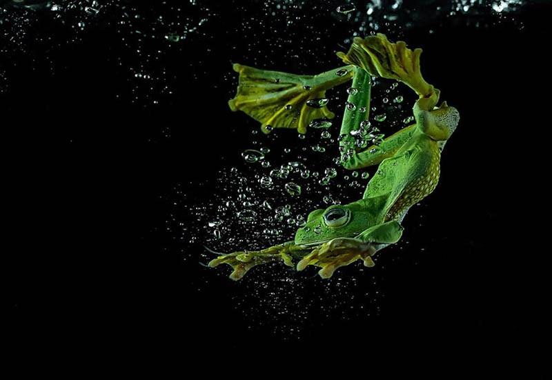 frog-photography-tanto-yensen-vinegret-19