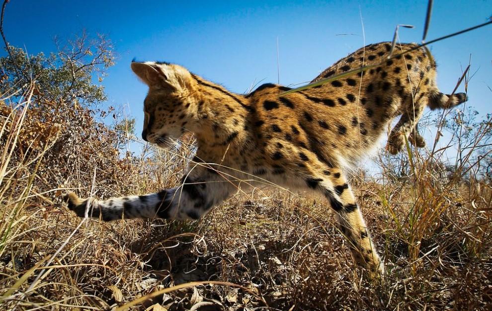 luchshie-snimki-prirody-ot-fotografov-bbc-10