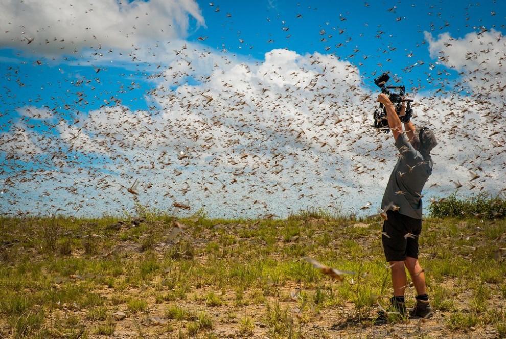 luchshie-snimki-prirody-ot-fotografov-bbc-4