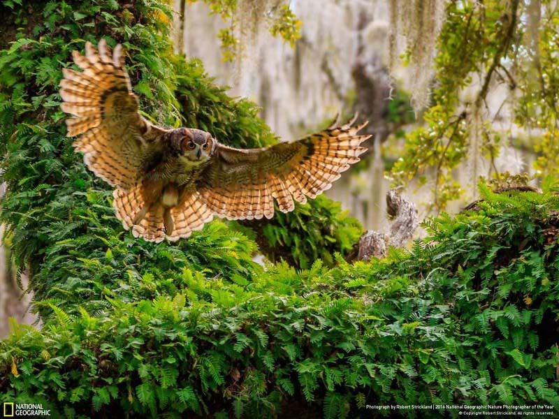 national-geographic-nature-photographer-of-the-year-finalists-2016-2-vinegret-3