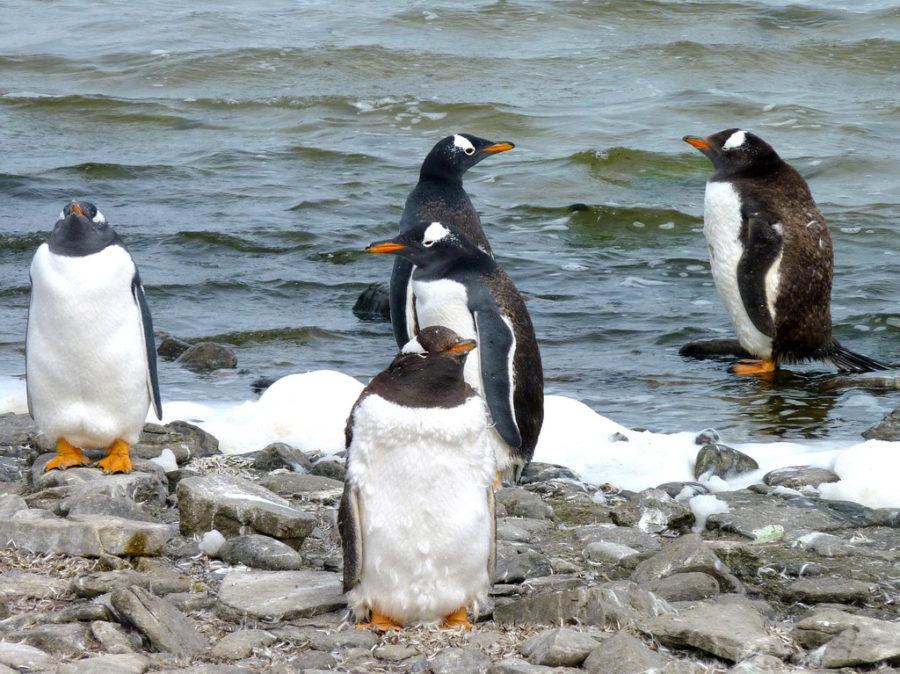 Удивительный мир пингвинов