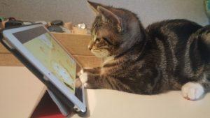 кот играет на телефоне