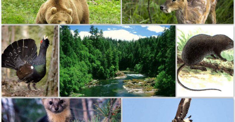 Животный мир тайги фото