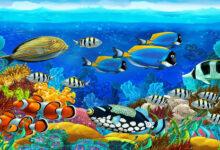животный мир морей и океанов