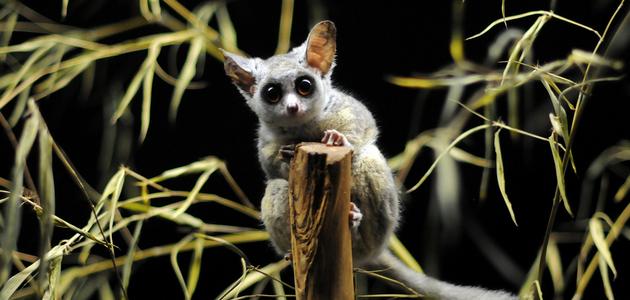Странные и удивительные животные
