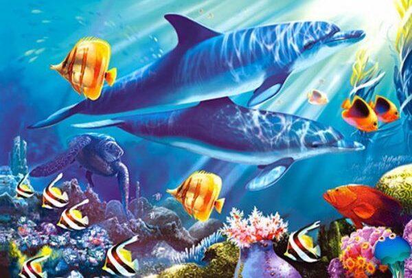 животный мир океана