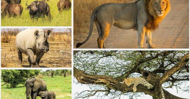 Большая Африканская Пятёрка фото
