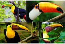 птицы с невероятными клювами