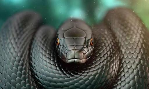 Черная мамаба самая длинная ядовитая змея