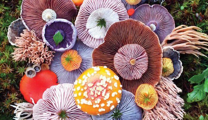 Ошеломляющие композиции из лесных грибов