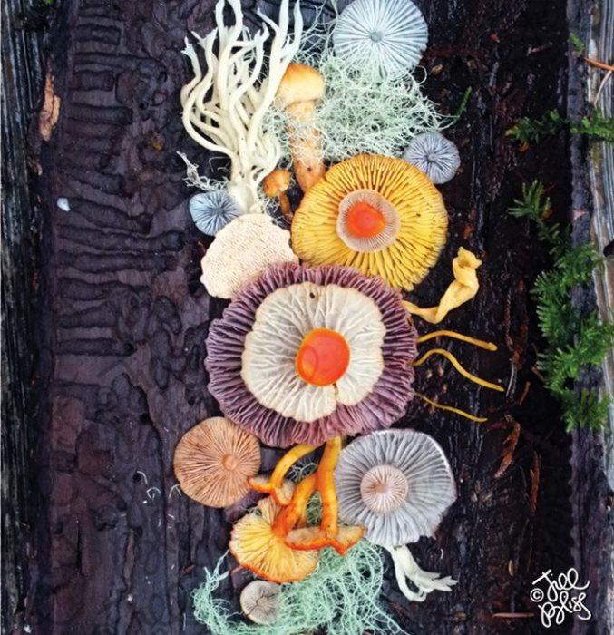 живые грибы