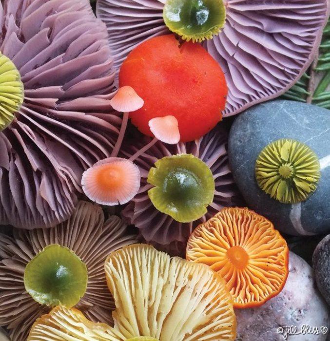 грибы много
