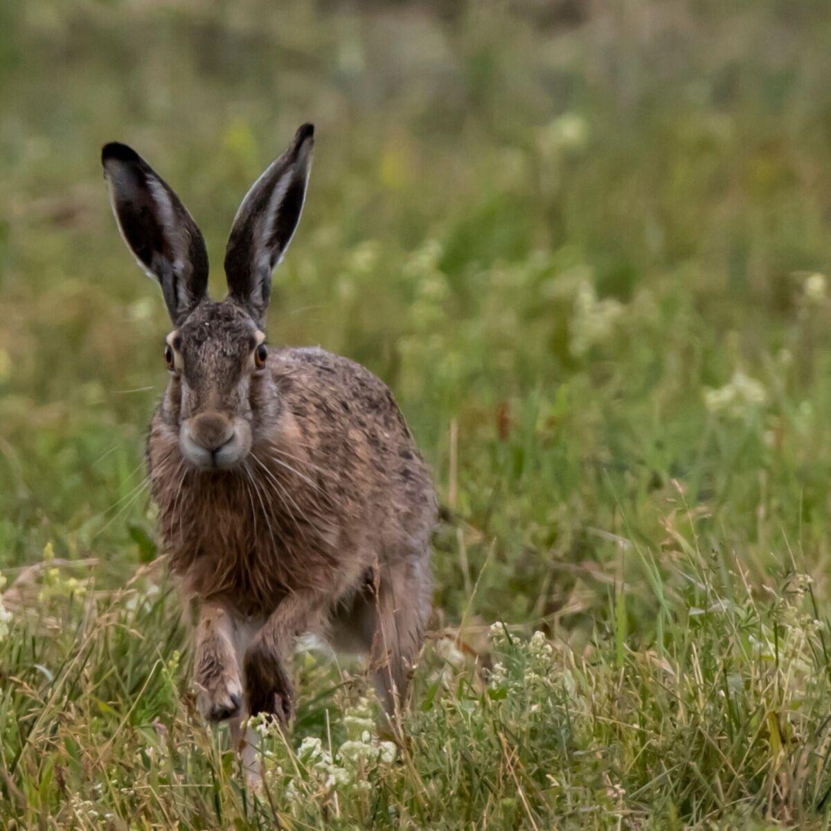 Заяц. фото