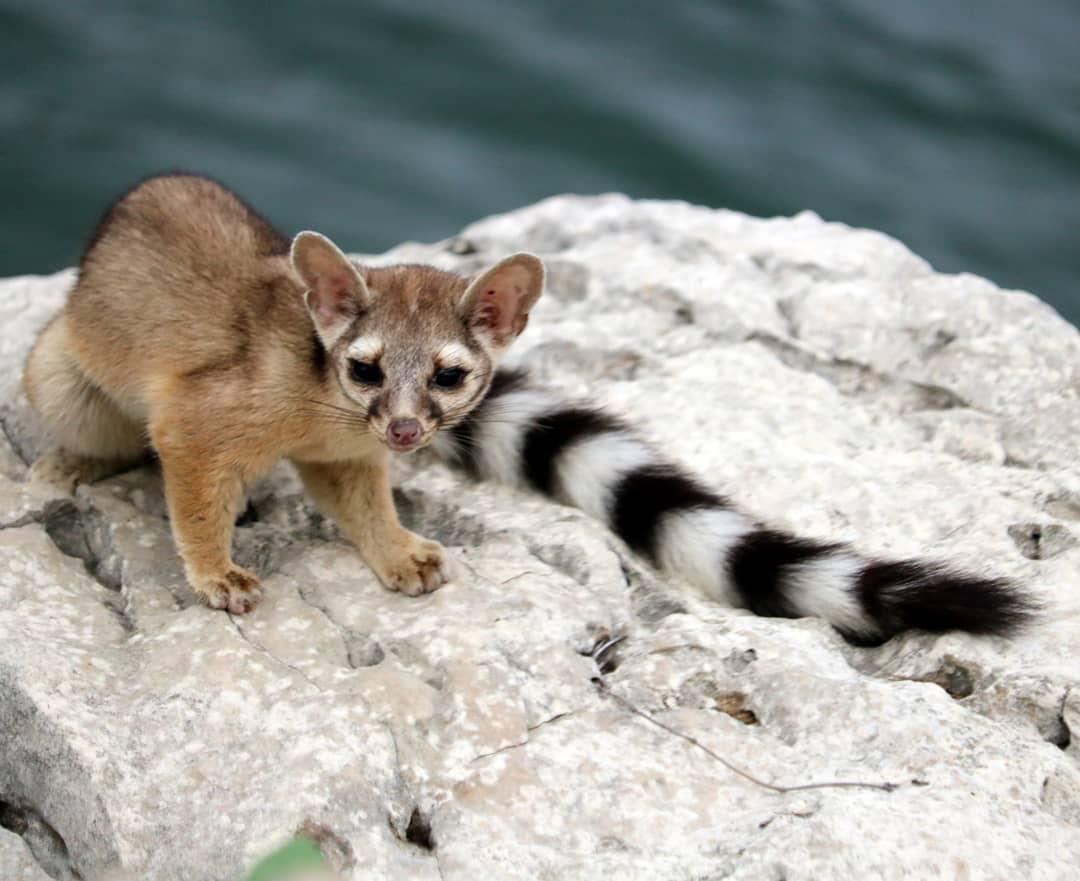 цвет животные северной америки фото с названиями чертой