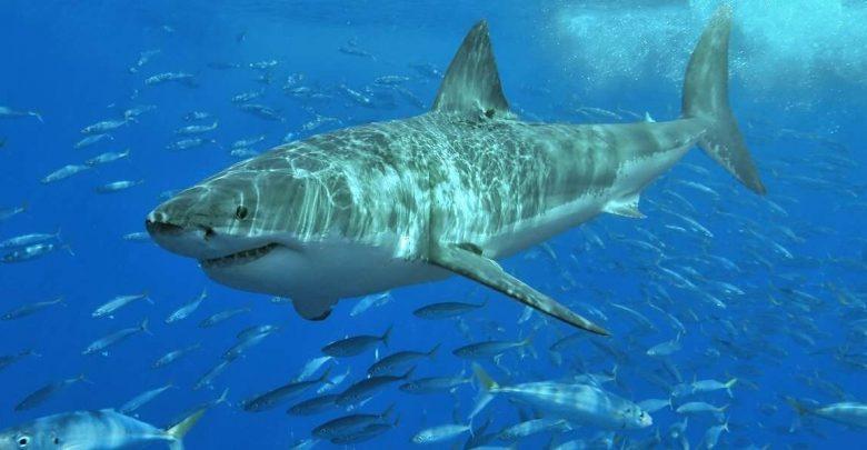 Акула напала на туриста