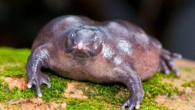Фиолетовая лягушка