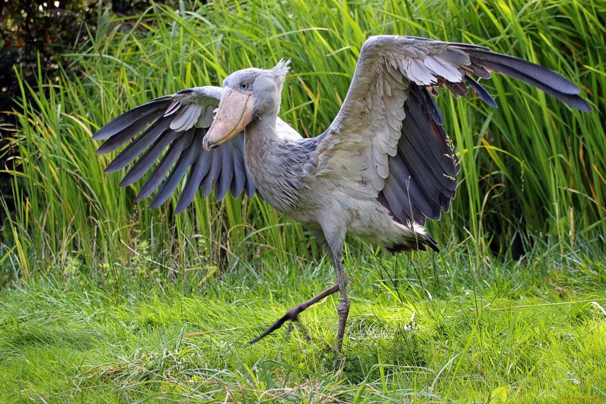 ваше самая первая птица фото беру фамилию