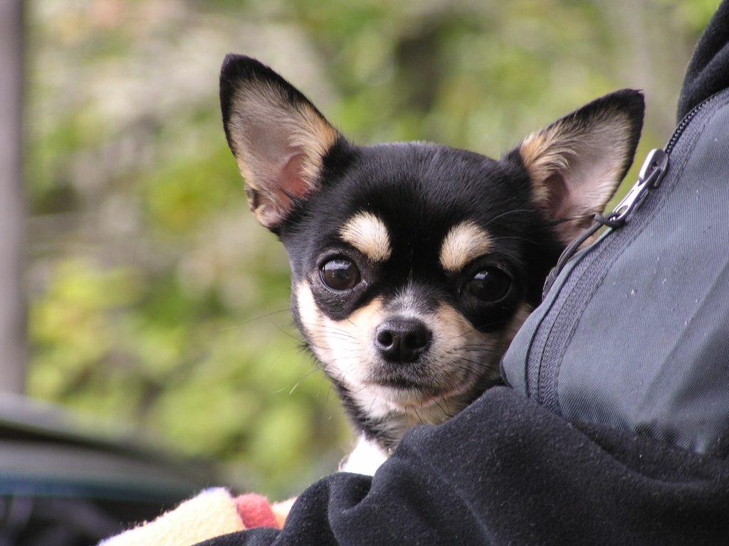 Сухой корм для собак: как правильно выбрать, чтобы не навредить