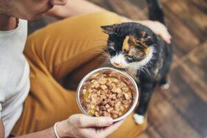 Сколько корма нужно котенку