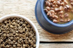 Как правильно хранить сухой и влажный корм для собак